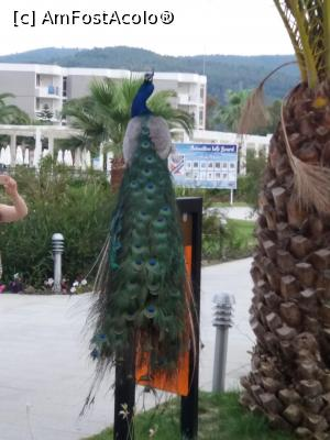 foto-vacanta la Palm Wings Ephesus Beach Resort (ex Surmeli) [Pamucak]