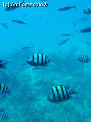 foto-vacanta la Marriott Beach Resort Hurghada