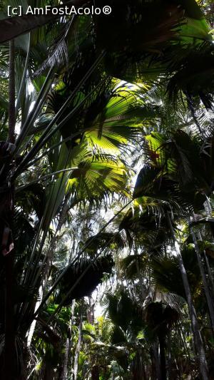 foto-vacanta la Vacanţa în Seychelles