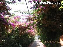 foto-vacanta la Alaiye Resort & Spa [Avsalar]