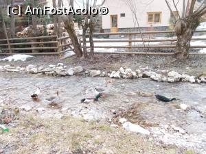foto-vacanta la Descoperă zona Dâmbovicioara - Brusturet