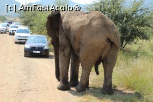 foto-vacanta la Vacanța în Africa de Sud