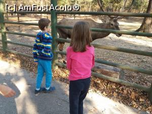foto-vacanta la Grădina zoo Tîrgu Mureş