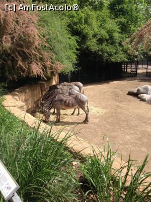foto-vacanta la Wilhelma Park [Grădina zoo - botanică]