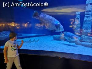 foto-vacanta la Antalya Aquarium