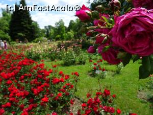 foto-vacanta la Grădina Botanică Dimitrie Brândză