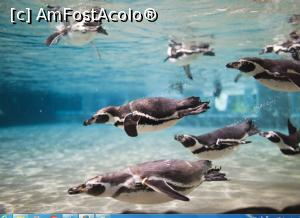 foto-vacanta la Sosto Zoo Nyiregyhaza
