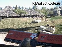 foto-vacanta la Valencia Bioparc - Grădina Zoologică din Valencia