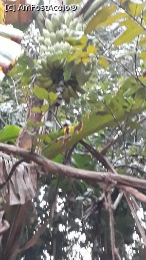 foto-vacanta la Jaana Guest [Sigiriya]
