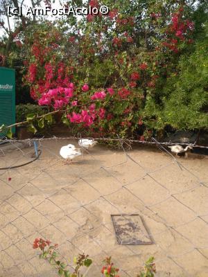 foto-vacanta la Regenta Resort Pushkar Fort [Pushkar]