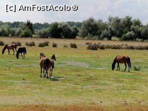 foto-vacanta la O zi în zona, pădurea, grindul Letea