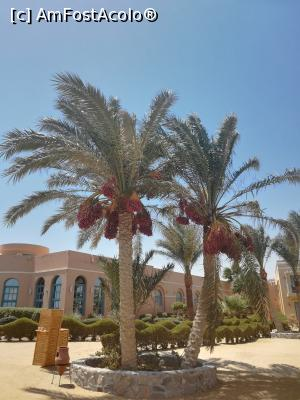 foto-vacanta la Bellevue Beach Hotel El Gouna