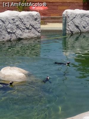 foto-vacanta la Zoo Lagos