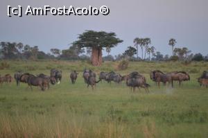 foto-vacanta la Circuite africane